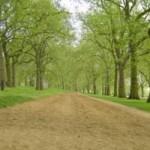 A horse path