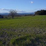 Vue de plaine agricole