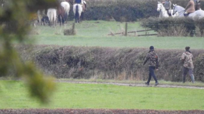 Sabs move in on the Flint and Denbigh hunt cub hunting