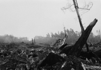 forest-destruction