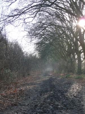 wick woods