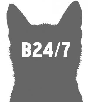bris247