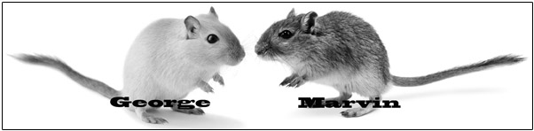 MAYORAL CANDIDATES IN GERBIL SHOCKER